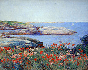 Cora Wandel Framed Prints - Hassams Poppies On The Isles Of Shoals Framed Print by Cora Wandel
