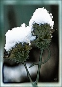 First Snow Framed Prints - Hats on Framed Print by Gun Legler