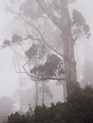 Sri Lanka Photos - Haunted Forest. Nuwara Eliya. Sri Lanka by Jenny Rainbow