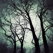 Winter Trees Digital Art Metal Prints - Haunted Metal Print by Natasha Marco