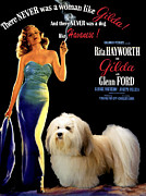 Havanese Paintings - Havanese Art - Gilda Movie Poster by Sandra Sij
