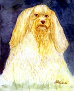 Havanese Paintings - Havanese Dog Portrait by Olde Time  Mercantile