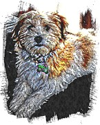 Havanese Prints - Havanese Puppy Print by Barbara Griffin