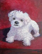 Havanese Paintings - Havenese - White by Vivian Haberfeld