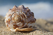 Seashell Art Photo Prints - Hawaii Gentle Breeze Print by Sharon Mau