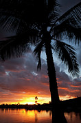 Charmian Vistaunet - Hawaii Sunset and Palm Tree