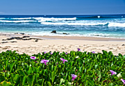 Michael Misciagno - Hawaiian Beach Garden