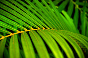 Frond Prints - Hawaiian Frond Print by Kelly Wade