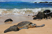 Hawaiian Green Sea Turtle Print by Leslie Kirk