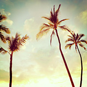 Sunflare Posters - Hawaiian Palms - Hipster Photo Square Poster by Charmian Vistaunet