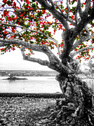 Long-lived Photos - Hawaiian Red-leafed Tree by Daniel Hagerman