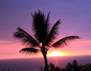 Karen Nicholson - Hawaiian Sunset and Palm