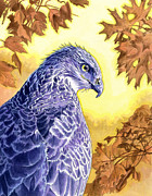 Leaves Painting Originals - Hawk by Alan  Hawley
