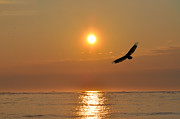 Beach Bird Posters - Hawk at Sunrise Poster by Bill Cannon