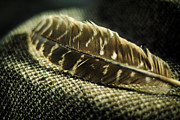 Brown Tones Prints - Hawk Feather  Print by Rebecca Sherman