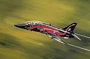 Raf Paintings - Hawk by Greg Bajor