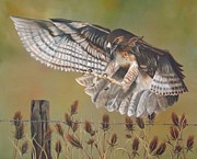 Red-tailed Hawk Paintings - Hawk Landing by Sky Painter