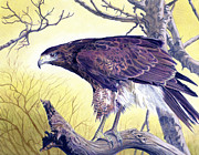 Hawk Painting Framed Prints - Hawk Landscape Framed Print by Alan  Hawley