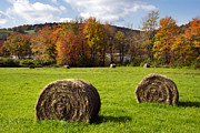 Vivid Fall Colors Framed Prints - Hay Bales And Fall Colors Framed Print by Christina Rollo