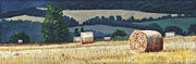 Bales Paintings - Hay bales on hillside by Helen White