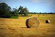 Dunnellon Photos - Hay by Dorothy Menera