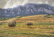 Bale Framed Prints - Hay There Framed Print by Juli Scalzi