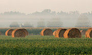 Haybale Photo Prints - Haybales Print by Sarah Boyd