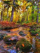 Brook Burling - Haymarsh Creek