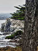 Point Park Mixed Media Posters - hd 428 Point Lobos 2 Poster by Chris Berry