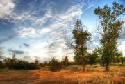 Picturesque Digital Art Posters - Hdr Landscape Poster by Svetlana Sewell