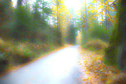 Saltspring Photo Originals - Hdr road by Graham Foulkes