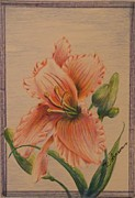 Green Foliage Drawings Prints - He is the Lily Print by Teresa Johnson