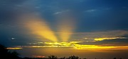 Tam Ryan - Headlights in the Sky