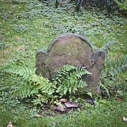 Headstones Posters - Headstone and Ferns Squared Poster by Teresa Mucha