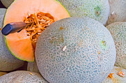 Cantaloupe Photo Prints - Healthy Cantaloupes Print by Deb Buchanan