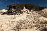 Florida Panhandle Prints - Healthy Dunes Print by Adam Jewell