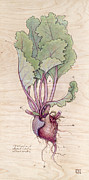 Botany Pyrography Framed Prints - Heart Beet Framed Print by Fay Helfer