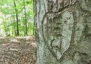 Jonathan Welch Prints - Heart Carved into a Tree Print by Jonathan Welch