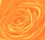 Tangerine Mixed Media Posters - Heart Of An Orange Rose Poster by SophiaArt Gallery