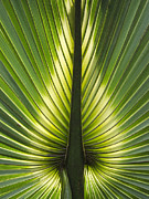 Heart Of Palm Print by Roger Leege