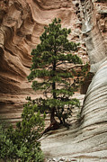 Rooted Art - Heart of the Canyon by Terry Rowe