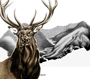 Elk Drawings - Heart of The Hunted by Patricia Howitt