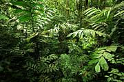 Heart Of The Rain Forest - Costa Rica Print by Matt Tilghman