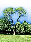 Heart Tree Print by Annie Zeno