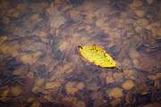 Fallen Leaf Photos - Heartsinking - Featured 3 by Alexander Senin