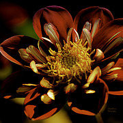 Plant Greeting Cards Art - Heartthrob Dahlia by Julie Palencia