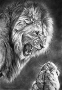 Lioness Drawings Posters - Heat Of The Night Poster by Peter Williams
