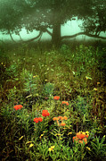 Storm Prints Metal Prints - Heaven in the Gloom I - Blue Ridge Parkway Metal Print by Dan Carmichael