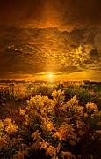 Phil Koch - Heavenly Earth