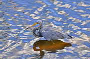 Al Powell Photography - Heavenly Heron